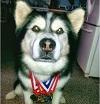 Самые сильные собаки мира (5 фото)