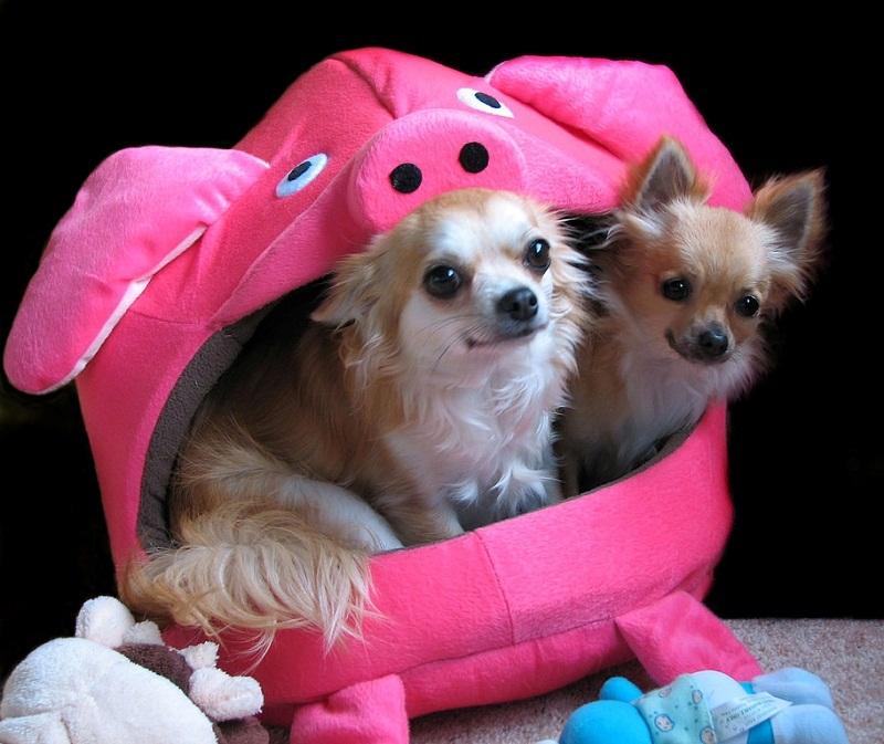 породы и фото маленькие собачки