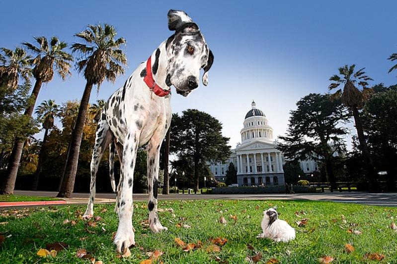 самая высокая собака (немецкий дог) и самая маленькая собака (чихуахуа)