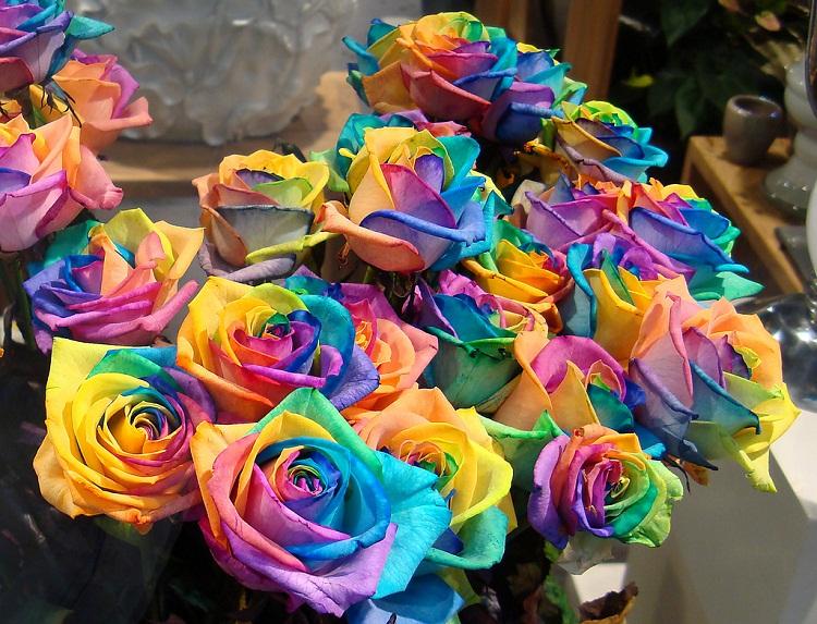 самые красивые и дорогие цветы: Радужные розы