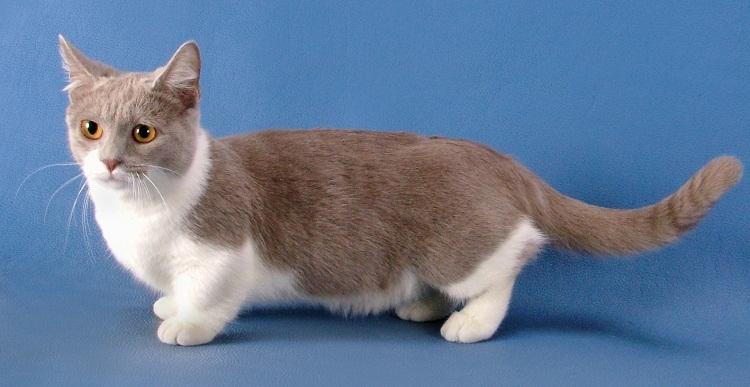 породы фото кошек