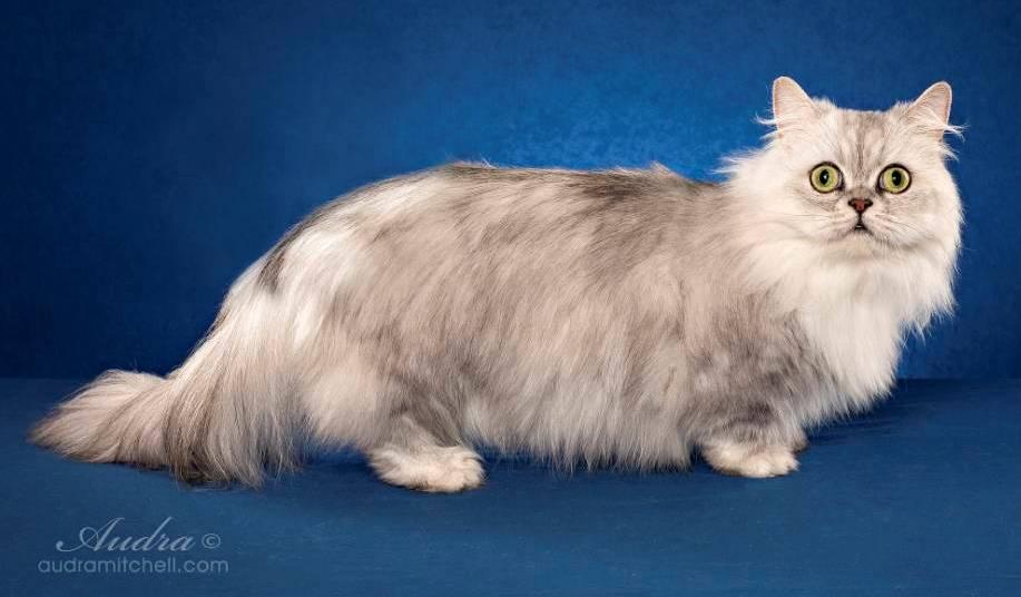 Книга породы кошек скачать