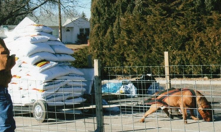 топ сильных собак: бордоский дог Кинг Дюкс / King Dukes. фото
