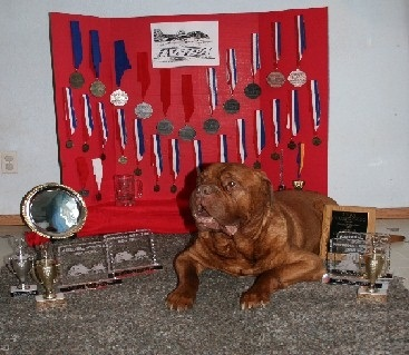 очень сильная собака бордоский дог Кинг Дюкс / King Dukes. фото